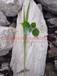 棉花专用硅钙肥10目20目40目60目100目全国销售