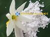 海南硅肥325目供應有機硅肥生物硅肥西瓜專用硅肥Sio2>98%
