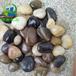 天津鹅卵石滤料厂家优惠促销