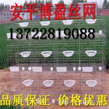 鸽子笼多种规格可选肉鸽笼鸽子笼三层12位鸽笼图片