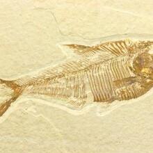 郑州化石鉴定中心图片
