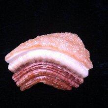 国内哪里鉴定收购东坡肉奇石的图片