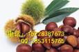 赫章桃树苗种植