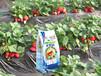 花果精灵水溶肥适用于各类土壤