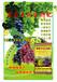 葡萄專用生物有機肥葡萄專用基施肥