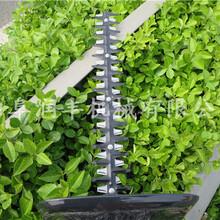 手持式茶树绿篱修剪机园林造型绿篱修剪机图片