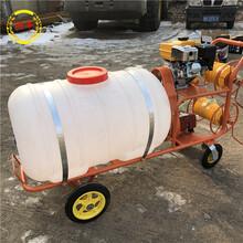 果园喷药机电动推车式打药机背负式喷雾机图片