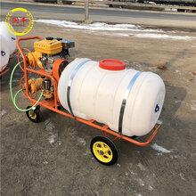 社區牧場消毒打藥機便攜式手推噴藥機遠射程果園噴霧器圖片
