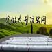 济南原厂直销聚乙烯单丝蔬菜防虫网防鸟网(遮阳网)专用可定做缝制