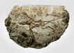 古生物化石怎么收购出高价