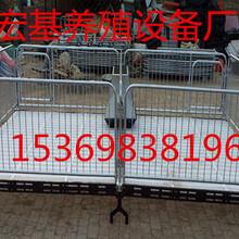 现货供应小猪保育床2100×3600断奶猪保育栏专业生产价格低图片