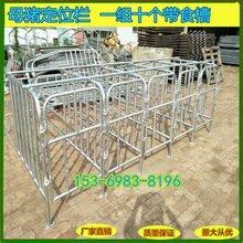 猪的定位栏尺寸猪场定位栏生产厂家图片