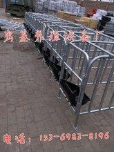曲靖养猪设备厂家母猪定位栏尺寸定位栏带食槽报价图片