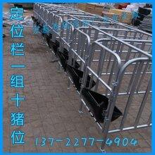 沧州定位栏带食槽的价格母猪定位栏一组多少钱图片