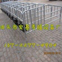 供应楚雄母猪定位栏养猪设备猪用定位栏尺寸定位栏配套设备图片