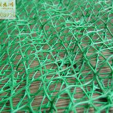 山西三维植被网,河道边坡植草绿化网