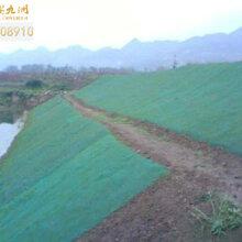 陕西三维植被网,公路边坡植草绿化网