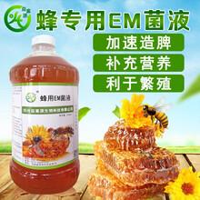 夏季蜜蜂養殖常見注意事項圖片