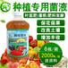大白菜軟腐病、霜霉病、病毒病的防治方法
