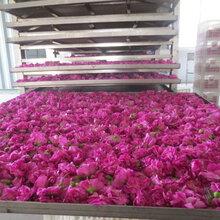 平阴重瓣红玫瑰—惠农玫瑰花茶图片