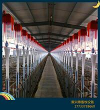 养猪料线猪场自动上料设备猪场料线