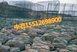 格宾石网笼规格报价格宾石笼一平米多钱啊