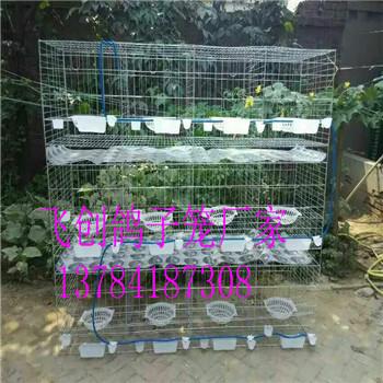 铁丝鸽笼厂家批发鸽子笼三层鸽笼十二位鸽笼