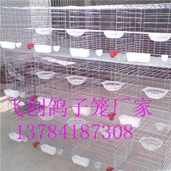 鸽子笼标准鸽子养殖笼鸽子配对笼鸽笼规格齐全大量批发