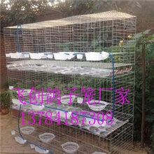 鴿子籠價格-三層鴿籠四層鴿籠鴿子食盒飲水器廠家直銷圖片