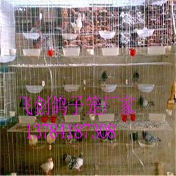 鸽子笼批发鸽笼鸽子养殖笼鸽子配对笼生产厂家