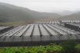 福林农业专业建造各类温室