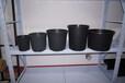 优质加仑盆/育苗盆/育苗容器/塑料花盆(1-30)—博菲特专业生产
