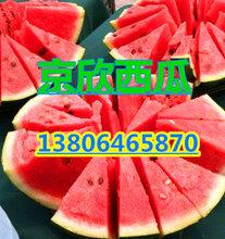 山东西瓜京欣西瓜甜王西瓜产地大量供应图片