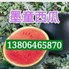 產地供應山東西瓜墨童黑皮無籽西瓜紅玉西瓜糖度15以上圖片