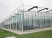 承接宁德龙岩南平漳州泉州温州蔬菜温室大棚育苗室花卉大棚生态餐厅