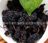 桑葚批发中药材黑桑葚子桑葚干补肾乌发生发养颜茶药食同源