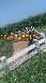 鄢陵桥栏杆加工生产-水泥简易桥栏杆制作