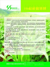 微生物制剂生物功能菌有机肥功能性菌剂生物功能菌土壤调理剂