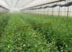 供应重庆市冬暖式蔬菜大棚工程建设规模及价格