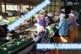 出国劳务韩国本土工作签过去工作待遇好费用低