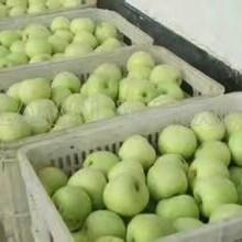 山東早熟蘋果圖片