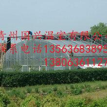国兴温室工程有限公司