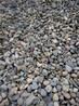 福建鹅卵石,砾石供应
