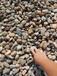 漳州厦门鹅卵石铺路用5-8cm