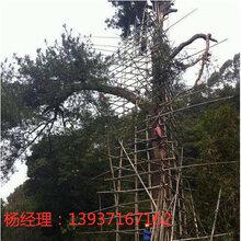 高速公路防雷接地工程CMA防雷资质河南扬博防雷工程接地材料厂家图片