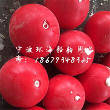 宣城海面养殖浮球金昌塑料PE浮漂萍乡滚塑水葫芦图片