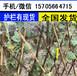 鄭州市新鄭市護欄隔斷田園裝飾竹子運行成本,利潤高嗎?