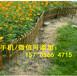 长汀县篱笆栏户外室外庭院别墅草坪栏杆铁栅栏