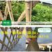 平湖市竹籬笆庭院裝飾隔斷籬笆柵欄圍墻護欄爬藤
