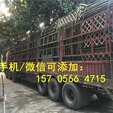 石台县pvc变压器栅栏pvc变压器栏杆效率高的图片